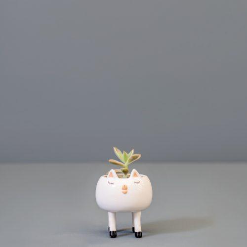 Succulent in ceramic pigs | Stodels Online Store