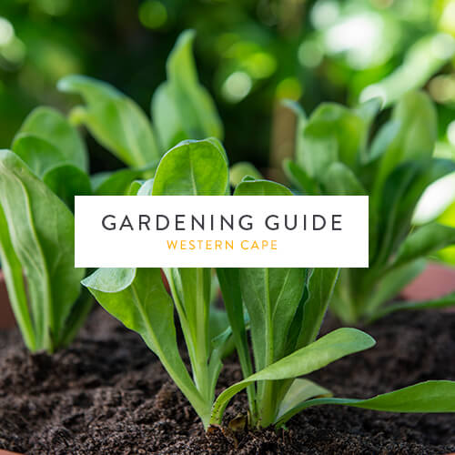 May gardening guide | Western Cape | Stodels Garden Centre