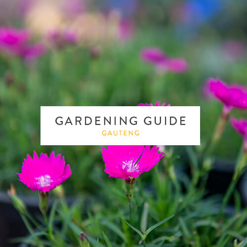 May gardening guide | Gauteng | Stodels Garden Centre