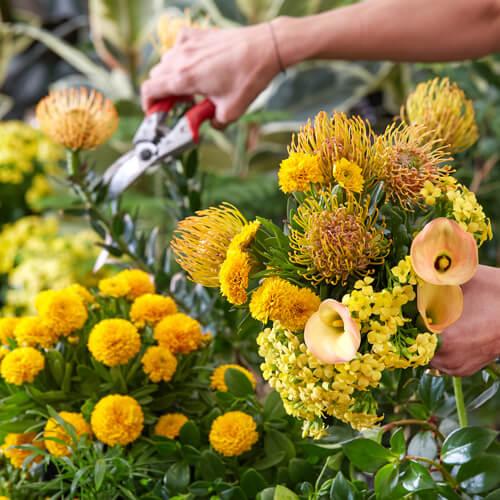 Planting design principles  | Stodels Online Store