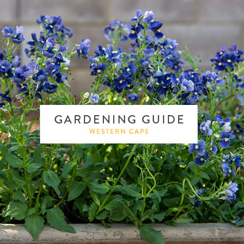 June gardening guide| Western Cape | Stodels Garden Centre