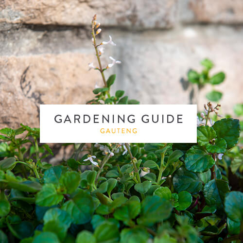 June gardening guide | Gauteng | Stodels Garden Centre