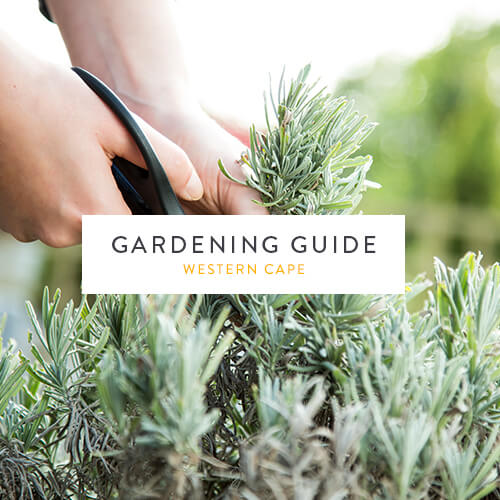July gardening guide | Western Cape | Stodels Garden Centre