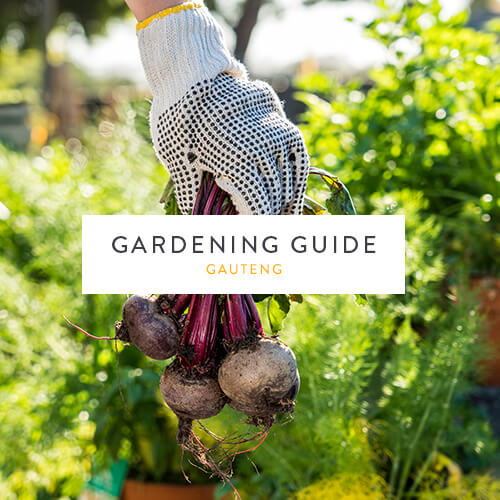 July gardening guide | Gauteng | Stodels Garden Centre