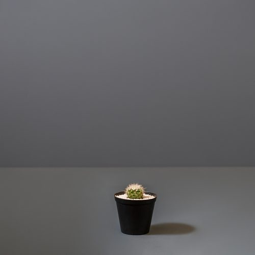 Small Cactus | Stodels Online Store