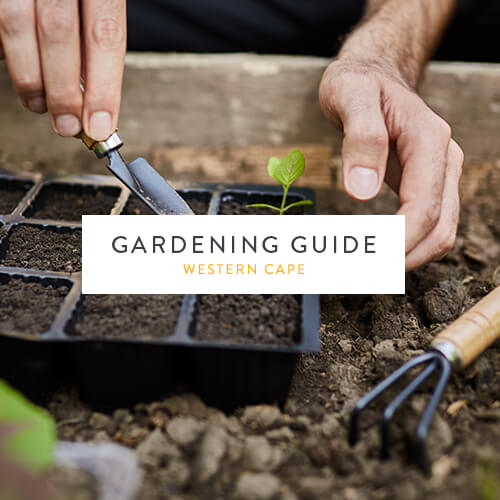 August gardening guide | Western Cape | Stodels Garden Centre