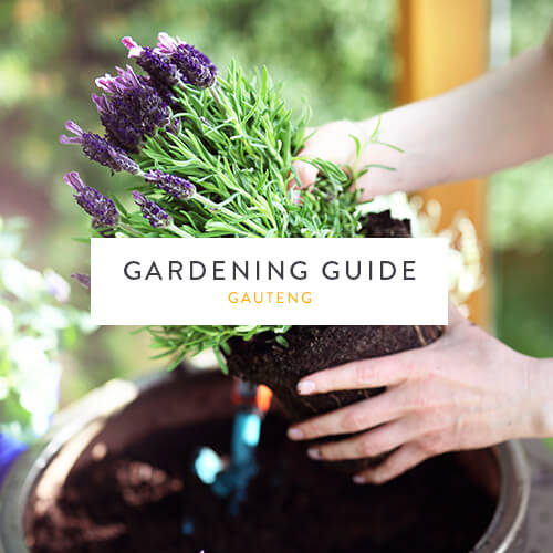 August gardening guide| Gauteng | Stodels Garden Centre