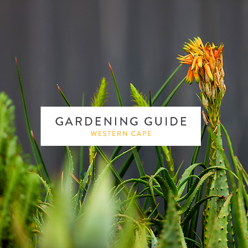 September gardening guide| Western Cape | Stodels Garden Centre