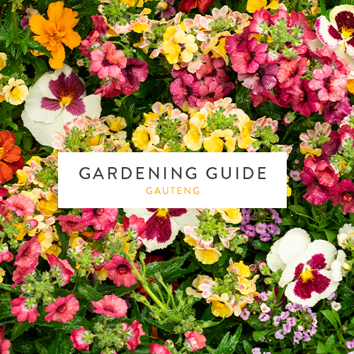 September gardening guide| Gauteng | Stodels Garden Centre