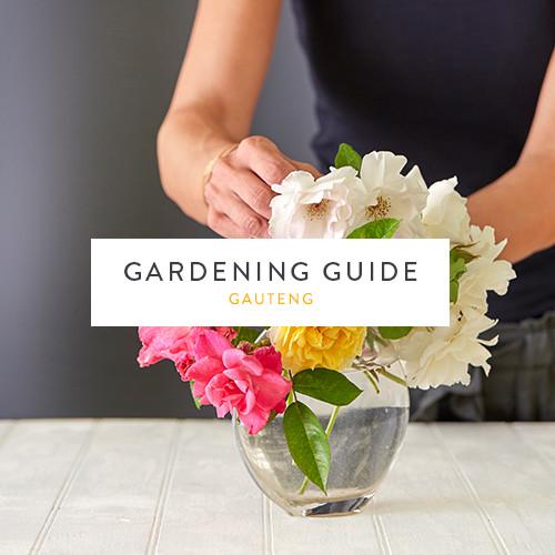 Gauteng Gardening Guide | October | Stodels Nursery
