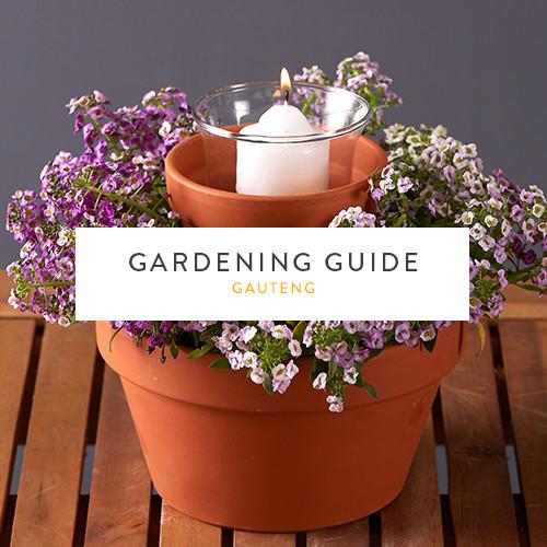 December Gardening Guide | Gauteng | Stodels Nursery
