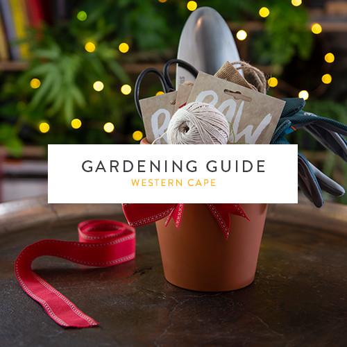 December gardening guide | Western Cape | Stodels Garden Centre